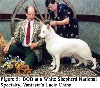 Figure 5: BOB at a White Shepherd National Specialty, Vantasia's Lucia China